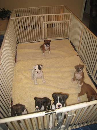 pet playpen medium puppy. top paw exercise pen