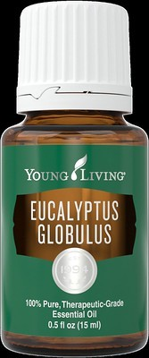15 ml bottle Eucalyptus Globulus Essential Oil by Young Living