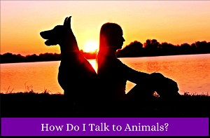 Learn to communicate with animals